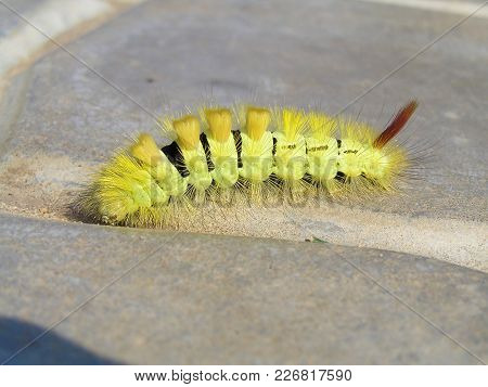 The Caterpillar Crawling On The Path In The Garden