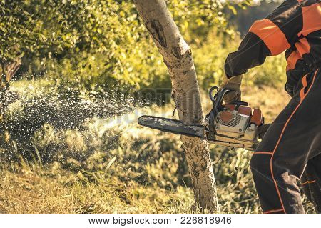 Lumberjack Cutting Tree With A Chainsaw In Summer.