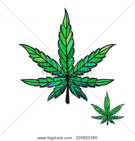 Vector Sheet Of Cannabis. Isolated On White Background.