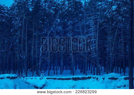 Night In A Pine Forest Mysteriously And Breathtakingly No One Around Only Tall Trees Are Very Beauti
