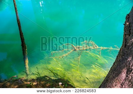 A Huge Old Snag Is Sticking Out Under The Water.