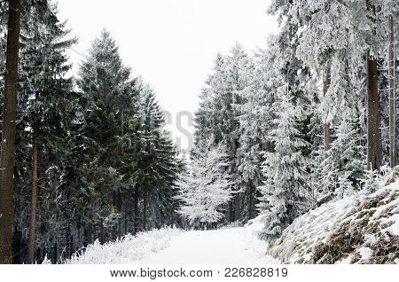 Winter Nature. Winter Forest Landscape In Early Winter Morning. Winter Nature View With Snowy Winter