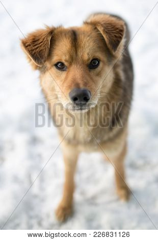 Dog Portrait Outdoors In Winter . In The Park In Nature
