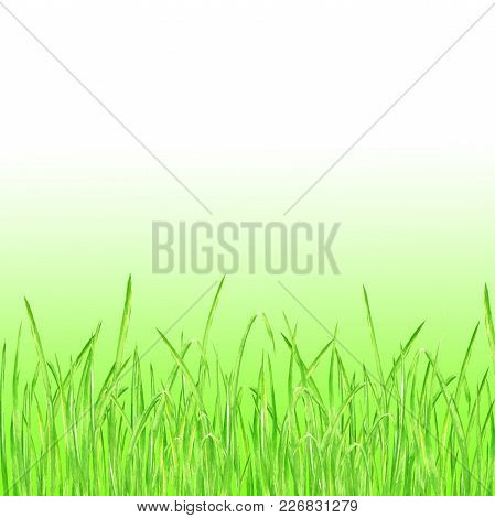 Green Grass. Summer Background With Watercolor Hand Drawn Bright Green Fresh Grass. Watercolour Eco