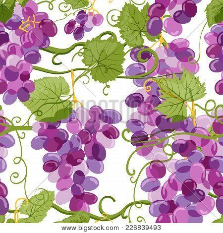 Vector Grapes Vine Seamless Pattern. Vineyard Hand Drawn Illustration. Design Elements For Wine Labe