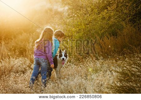 Family Time. Brother And Sister Are Walking With A Pet. A Young Siberian Breed Of Siberian Husky. Go