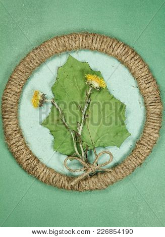 Herbarium. Coltsfoot, Foalfoot. Dry Plants In Framework Made Of Jute Thread. Scrapbooking.