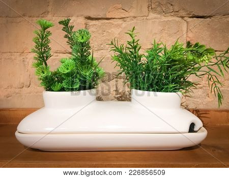 White Decorative Ceramic Pot With Two Green Plants. Modern Home Decor.
