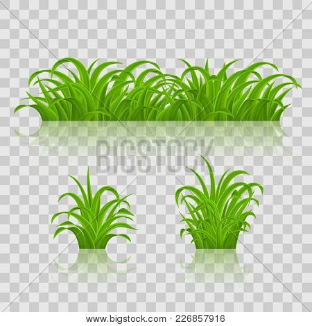 Backgrounds Of Green Grass. Isolated On Transparent Background