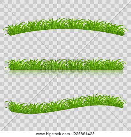 Set Of Green Grass For Spring Or Nature Design. Illustration On Transparent Background