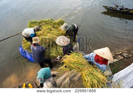 Farmers Are Loading Harvested Rice From Floating Boat Up To Transport Vehicle Next To The Lake