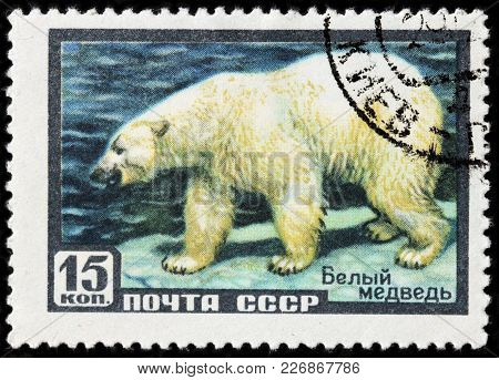 Luga, Russia - February 08, 2018: A Stamp Printed By Russia (ussr) Shows Polar Bear - A Carnivorous