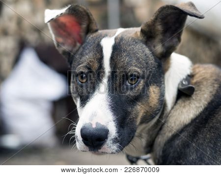 The Cute Unhappy Dog In Outdoor, Dog See In Camera
