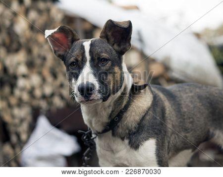 Cute Unhappy Dog Upset, Lonely, Stray Dog