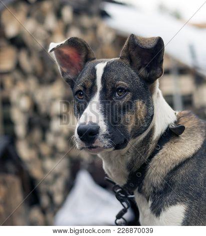 The Portrait Of A Sad Homeless Dog