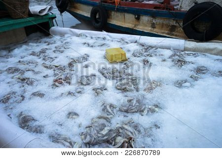 Caught Fishes Preserved By Ice In Tac Cau Fishing Port, Me Kong Delta Province Of Kien Giang, South