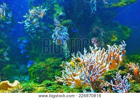 Colorful empty underwater world