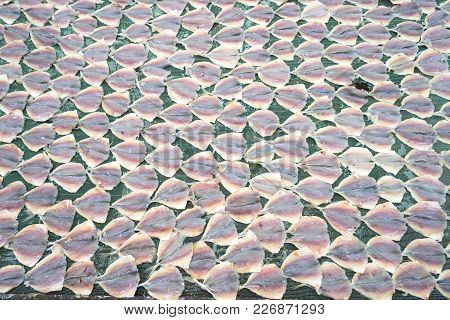 Yellowstripe Scad Fish Is Drying Outdoor Under Sunlight In Mekong Delta, South Of Vietnam