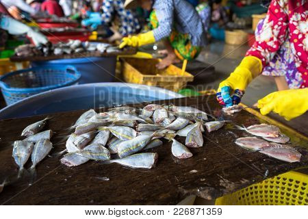 Dessecting Yellowstripe Scad Fish In Manual Production Line In South Of Vietnam