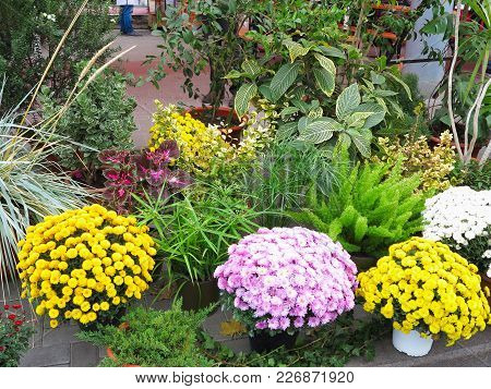Colorful Flowers In Pots At The Entry To Flower Shop