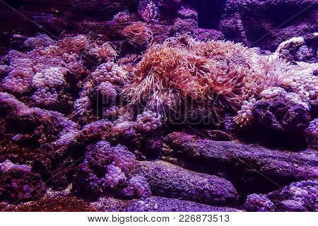Texture Of The Sea Anemone Macro Tentacles Corals