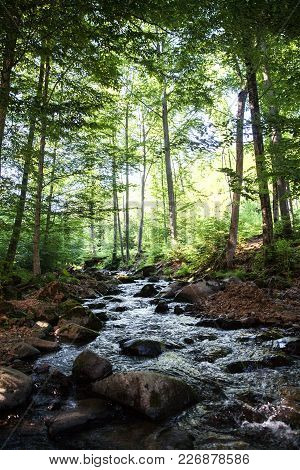 A Small Brook Trickles Down This Hill During Autumn In The Pocono Mountains Of Pennsylvania. A