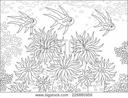 Funny Fishes Swimming Over Anemones On A Coral Reef In A Tropical Sea, A Black And White Vector Illu