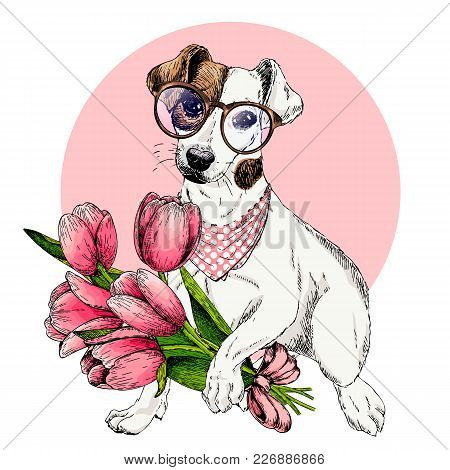 Portrait Of Jack Russel Terrier Dog With Tulip Bouquet. Welcome Spring. Hand Drawn Colored Vector Il