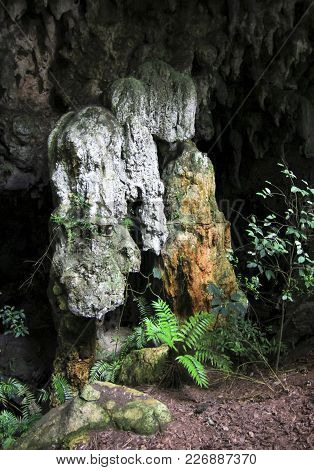 Cave Formations And Very Rare Cycad Plants (zamia Decumbens) In A Remote Jungle Cave In Toledo, Beli