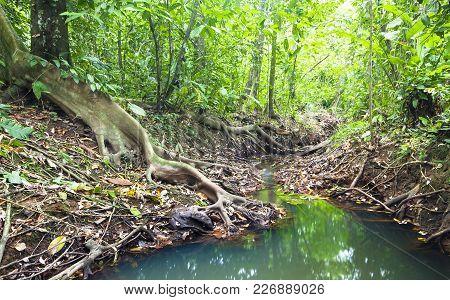 A Creek Flows Through A Dense And Lush Part Of The Costa Rican Jungle.