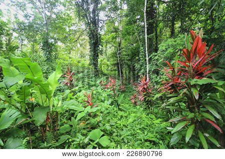 Bright Red Flowers Grow Among The Dense Tropical Jungle In Eastern Costa Rica.