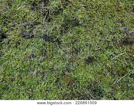 Moss In Spring