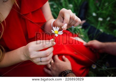 Close-up Above View Of The Female Tender Hands Are Picking The Daisy Petals Off. The Woman Is Playin