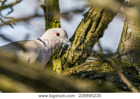 Dove Sitting On Tree Branch