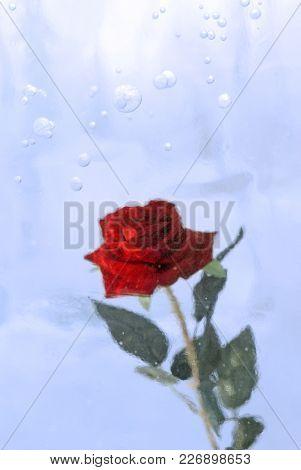 Scarlet Rose, Frozen In Translucent Blue Ice