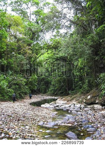 A Group Of Hikers Explores The Lush Jungle In Central Belize.