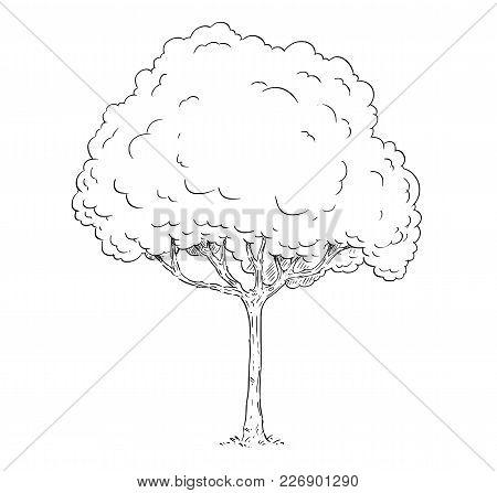 Cartoon Vector Doodle Drawing Illustration Of Broadleaved Or Deciduous Tree.
