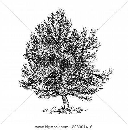 Cartoon Vector Doodle Drawing Illustration Of Pine Conifer Or Coniferous Tree.