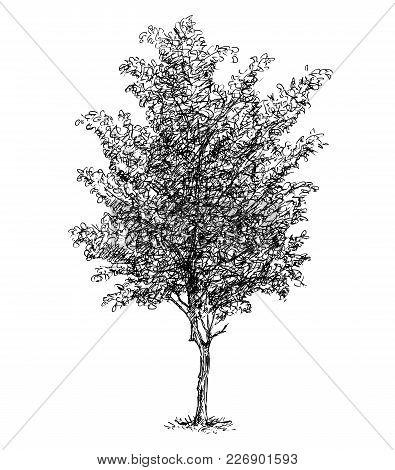 Cartoon Vector Doodle Drawing Illustration Of Broadleaved Or Deciduous Beech Tree.