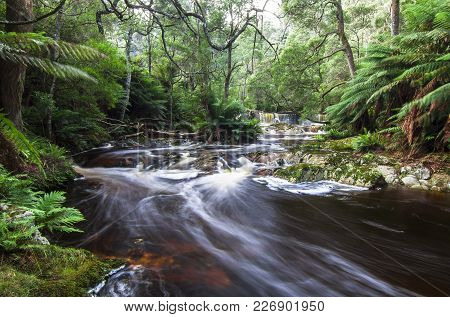 A Long Exposure Of A Stream Flowing Through A Lush Rainforest In Northeast Tasmania.