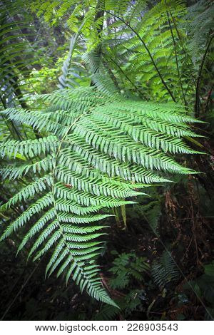 A Large Fern Frond Hangs Out In Space In The Monteverde Cloud Forest, Costa Rica.