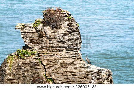 Spotted Shags (phalacrocorax Punctatus Punctatus) On A Layered Rock Formation At Pancake Rocks Near