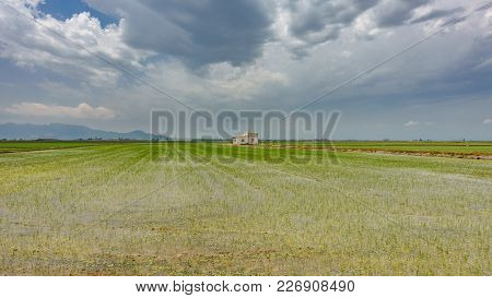 Wide Angle View Of Flooded Rice Plantation, House And Cloudy Sky