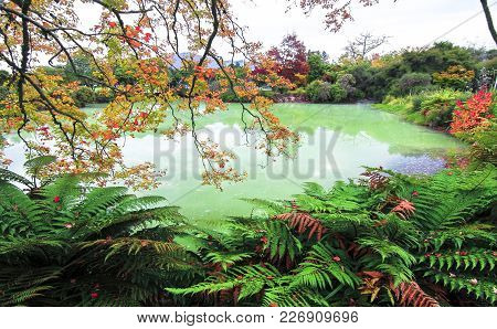 A Green Pond And Autumn Colors In Kuirau Park In Rotorua, New Zealand.