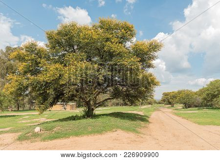 A Farm Scene With Dirt Roadat The Koranna Mountain Near Excelsior, A Small Town In The Free Strate P