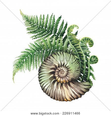 Watercolor Prehistoric Seashell With The Fern Branches Growing Out From It. Hand Painted Natural Ill