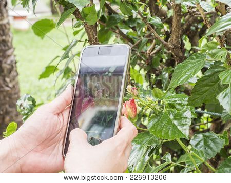 Travelers Tried To Photograph Flowers With Mobile Phones, Broken Glass Screens