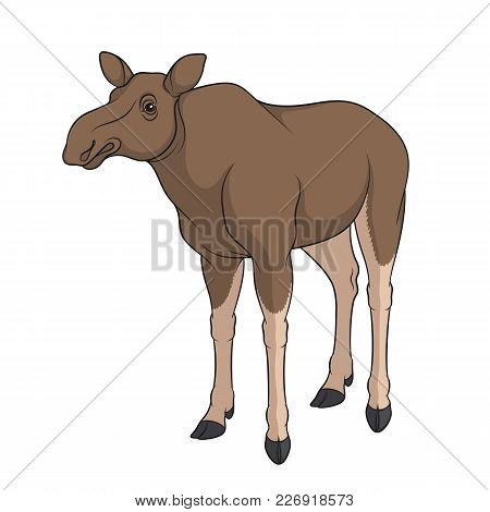Color Image Of Elk, Moose. Isolated Vector Object On White Background.
