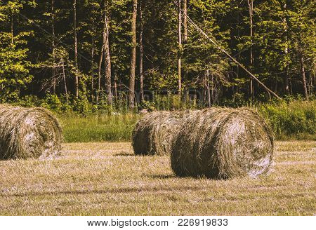 Farmers Pick Hay About Twice A Summer. This Hay Will Be Used To Feed Their Animals. This Photo Was T