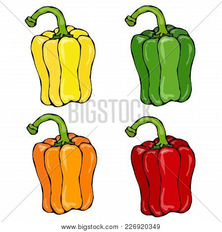 Orange, Yellow, Green, Red Paprika, Bell Pepper Or Sweet Pepper Front View. Hand Drawn Sketch Vector